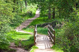skogs bild